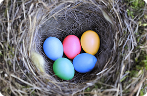 Google-Birds-Nest
